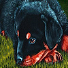 Little sad puppy puzzle