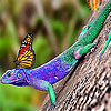 Lizard and butterflies puzzle
