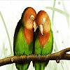 Love Song bird slide puzzle