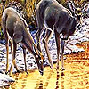Lovely deers in the river puzzle