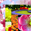 Lovely Flowers Jigsaw Puzzle