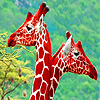 Lovely giraffes in the garden puzzle