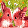 Lovely rabbits in the garden puzzle
