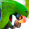 Macaw Parrot Jigsaw