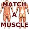 Match-A-Muscle