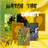 Match The Insect