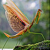 Mayfly in the river slide puzzle