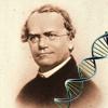 Mendel Quiz (Genetics)