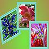 Modern Garden flowers puzzle