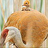 Mother and baby bird slide puzzle