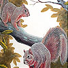 Naughty squirrels on the tree slide puzzle