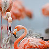 Nice flamingo family puzzle