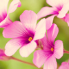Nice flowers Puzzle