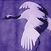 Night flying bird puzzle
