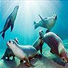 Ocean and seals slide puzzle