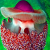 Ocean colorful jellyfish puzzle