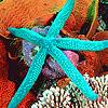 Ocean stars puzzle