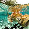Ocean turtles slide puzzle