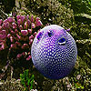 Oceanic purple fish slide puzzle