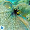 Octopus Jigsaw