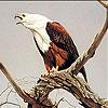 Old eagle slide puzzle