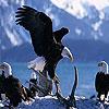 Old eagles slide puzzle