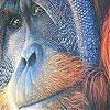 Old orangutan slide puzzle