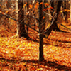 Orange Leaves in Fall Jigsaw Puzzle