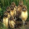 Owl siblings slide puzzle