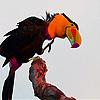 Parrot colored beak slide puzzle