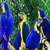 Parrot family puzzle