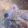 Pearl birds slide puzzle
