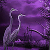 Pelicans on the moonlight puzzle