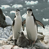Penguins Slide Puzzle