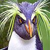 Pettish bird slide puzzle
