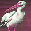 Pink beak  puzzle