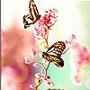 Pink butterflies slide puzzle