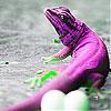 Pink chameleon slide puzzle
