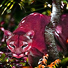 Pink cougar puzzle