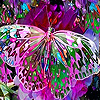 Pink fantasy butterfly slide puzzle