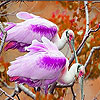 Pink finned birds slide puzzle