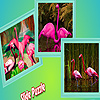 Pink flamingos in zoo puzzle