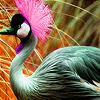 Pink headed bird in garden puzzle