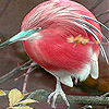 Pink honey bird slide puzzle