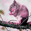 Pink hungry squirrel slide puzzle