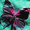 Pink paint butterfly puzzle