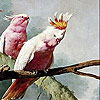 Pink parrots slide puzzle