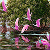 Pink river flamingos puzzle