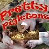 Pretty Pigletons