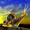 Prying snail slide puzzle